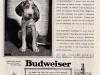 Budweiser Ad (1936)