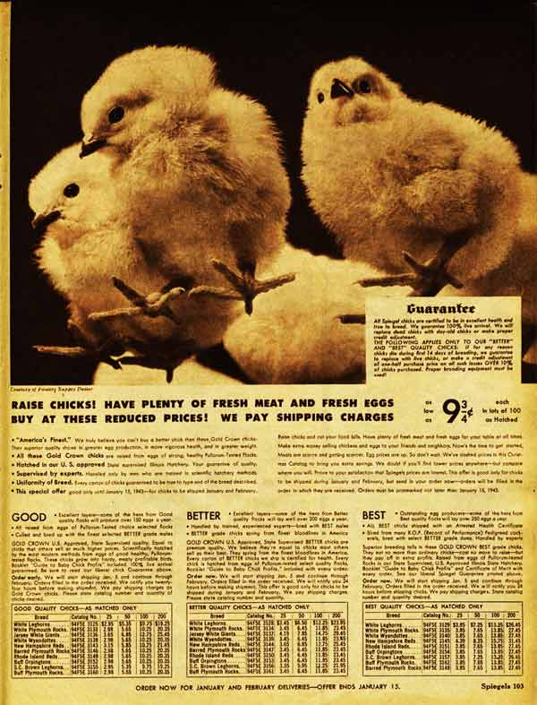 Where to buy chicks in the 1940s (Full Spiegel Ad)